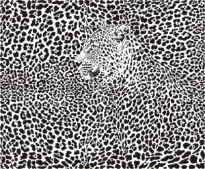 leopard hidden